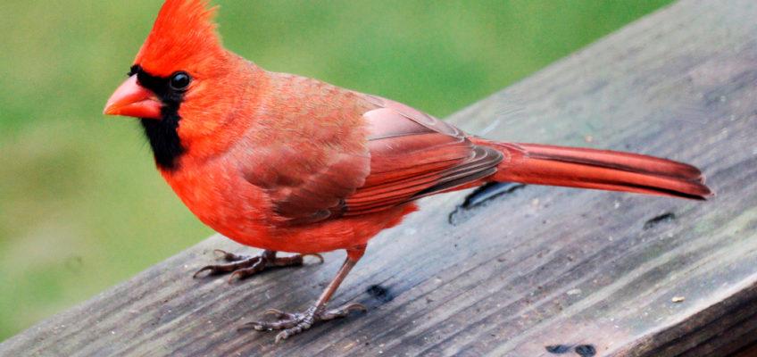 Cardinal Time-Travel…
